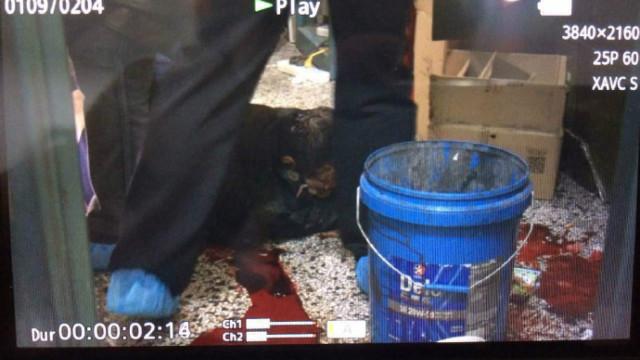 黑龙江一银行金库被劫,保安遇害