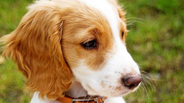 路人测试:会有人阻止虐狗人吗