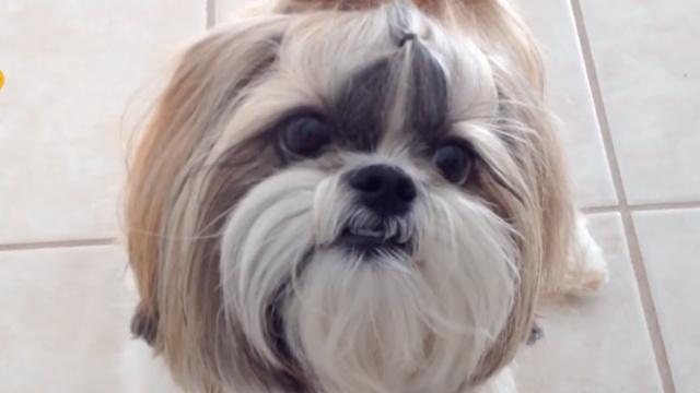 很烦很难受,狗狗也有节后综合征!