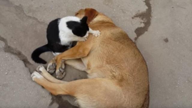 小野猫为狗按摩,网友:人不如狗