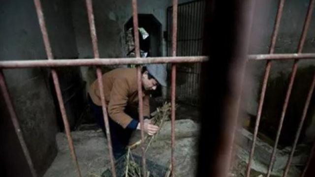 一个人的动物园,无力改善已停业