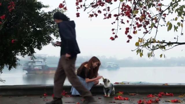男人心房失守,只因美女与狗