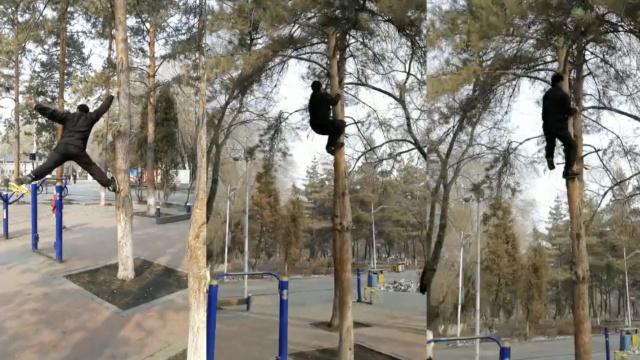 身轻如燕!老汉5秒爬10米高树