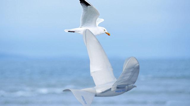 是鸟还是无人机,傻傻分不清