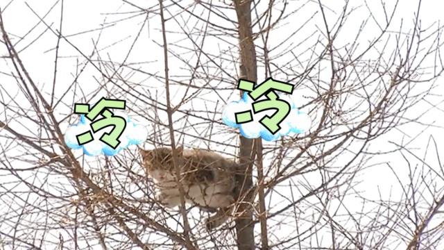 喵星人被困树梢,蜀黍狂摇树干救它