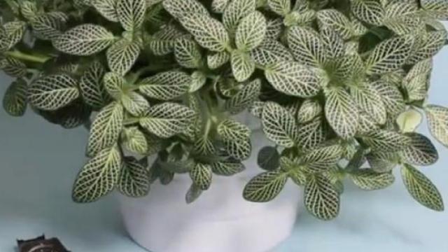 延时摄影展现植物生命的绽放