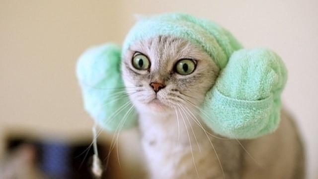 哈哈!这是我看过最好笑的猫咪视频