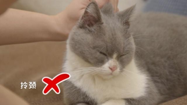 3招抱猫技能,教你如何与猫咪更亲