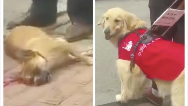 狗被碾女子嚎哭,导盲犬路过2次回首