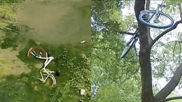 杭州共享单车遭破坏:丢河沟,挂高树