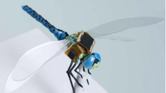 活蜻蜓无人机:一半昆虫,一半机械