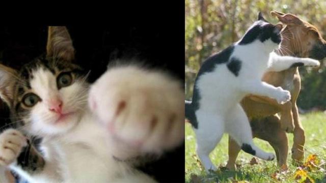 猫控福利!盘点史上八大喵喵拳