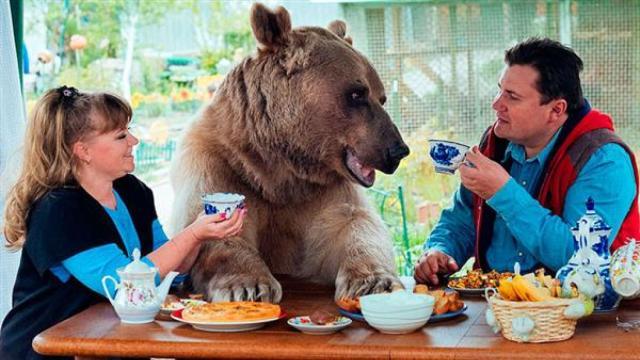 撒娇卖萌的狗熊,过得比人还滋润