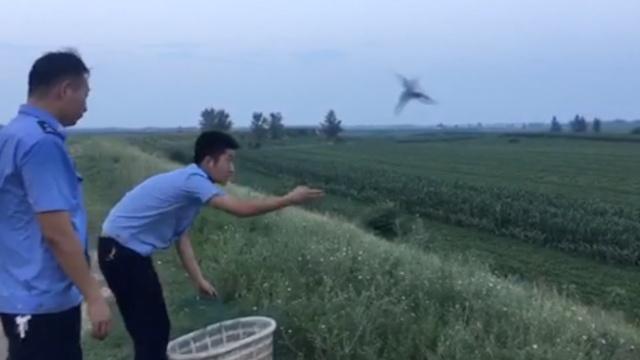 残忍!河坝上300米长网捕住百余野鸟