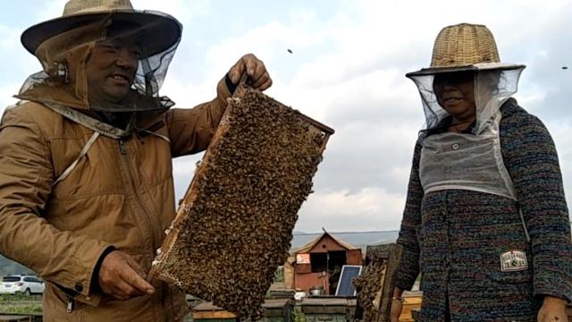 夫妻养蜂30载,每天被蛰&蜂蜜泡饭