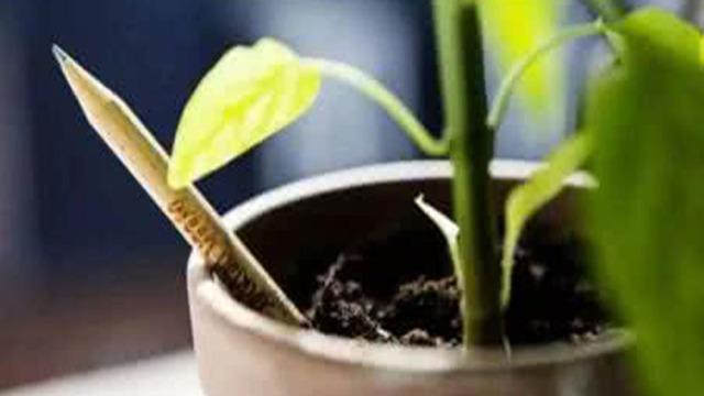 铅笔也能发芽?!传说中的妙笔生花