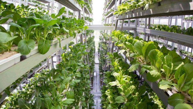 美国垂直农场:产量高100倍,节水90%