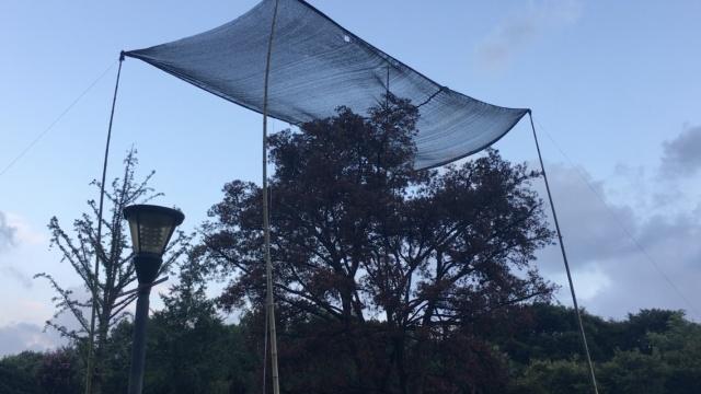 怪!大树怕晒怕高温,钻进遮阳篷避暑