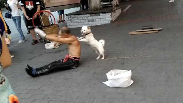 大爷带狗卖艺讨生活,1人1狗走天涯