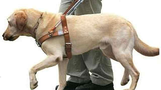 盲人脚踢导盲犬,狗狗被协会收回