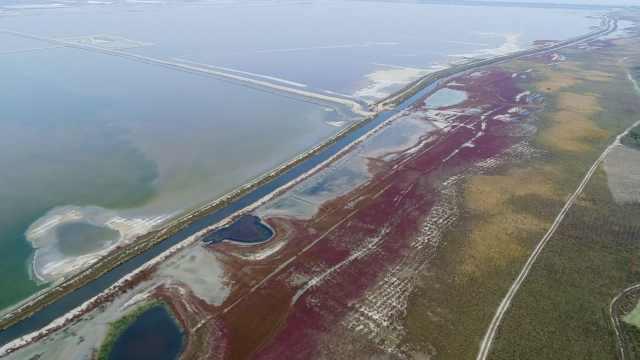 美哭!盐湖植被变红,湖面如铺红毯