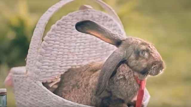 波兰鼓励生育广告:像兔子一样生吧