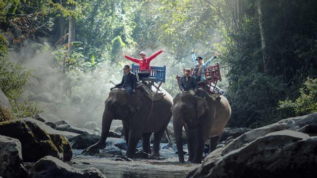 直播:悲剧后,泰国大象仍带镣铐被骑