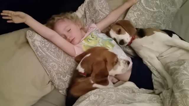 俩狗狗陪小主人一起赖床,太温馨了