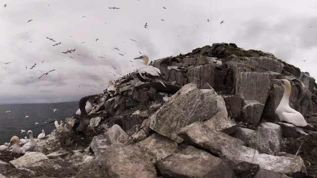 两万只鸟聚在一起密密麻麻,还打架