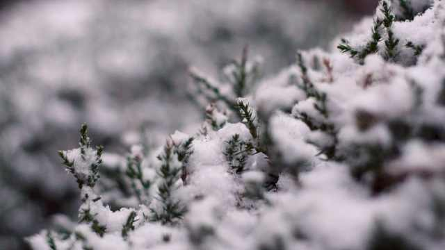 芜湖第二次下雪
