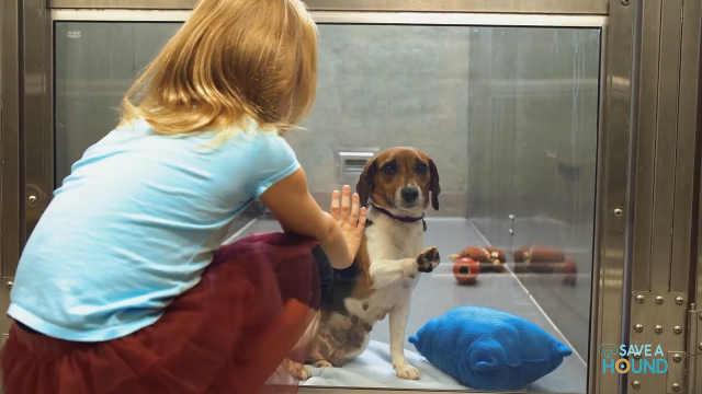 狗狗需要温暖的家,请带他回家