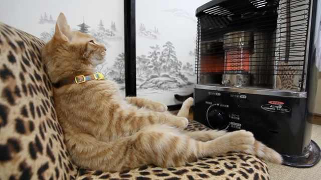 烤着暖炉发着呆,极致享受的猫生