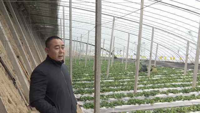 他种白草莓带村民致富,1斤能卖85元