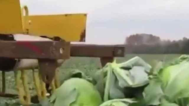 日本为制作泡面一年浪费4吨蔬菜!