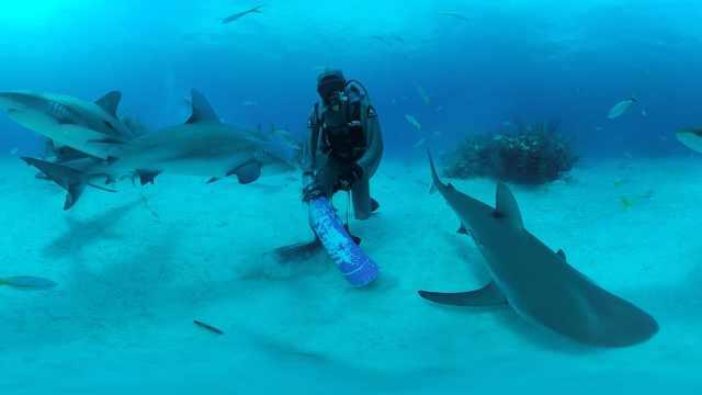 奇观!VR带你潜入大海,与鲨鱼共舞