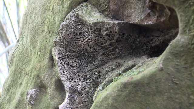 村民山沟挖盆景,意外发现恐龙化石