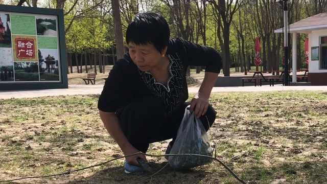 东北大妈买朝阳公园月票只为挖野菜