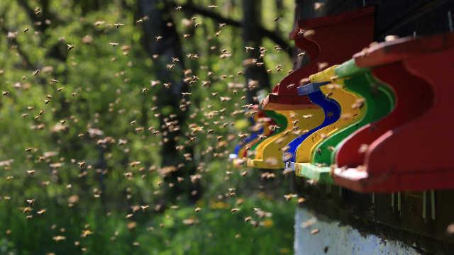 直播:用蜜蜂演奏!振翅电音蜂巢合成
