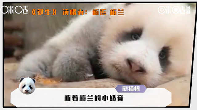 进击的咪咕熊猫惊:今夜不让你入睡