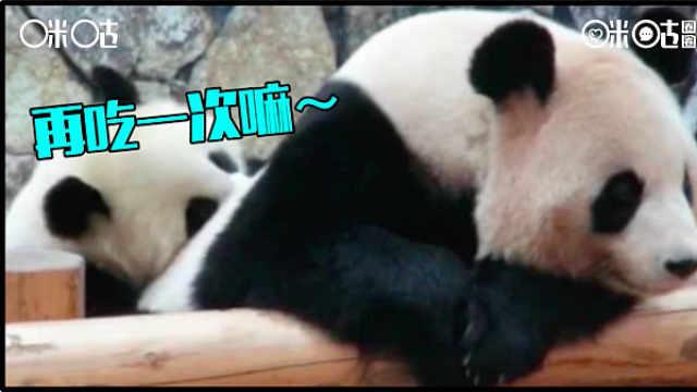 进击的咪咕熊猫惊:熊娃出没了!