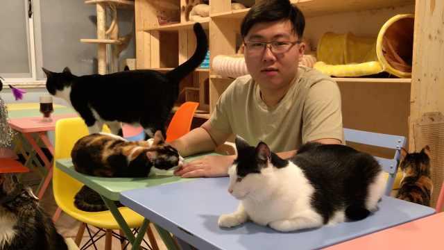 90后辞职救流浪猫:家人曾报警反对