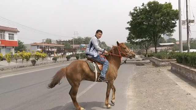 小伙骑马奔40里赶庙会:比开车舒服