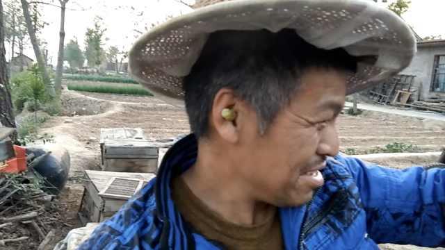 走近养蜂人:为护蜂王,巢穴塞耳朵