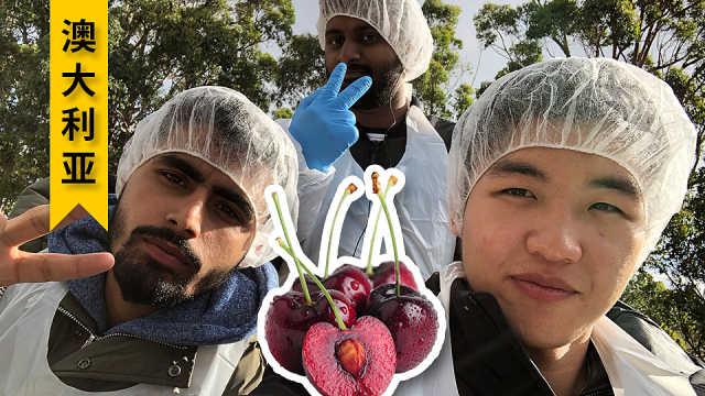 留学生在澳洲农场的兼职生活