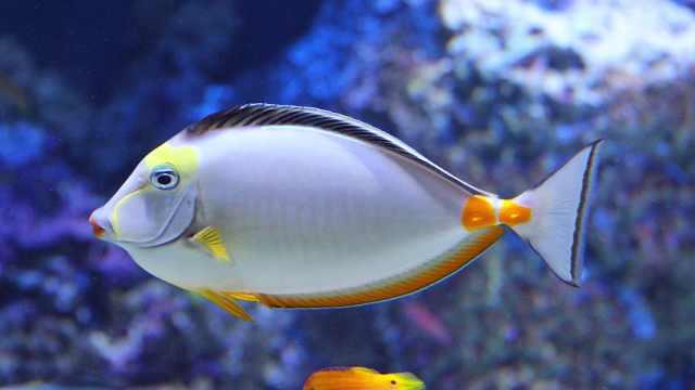 为什么鱼睡觉时不闭上眼睛?