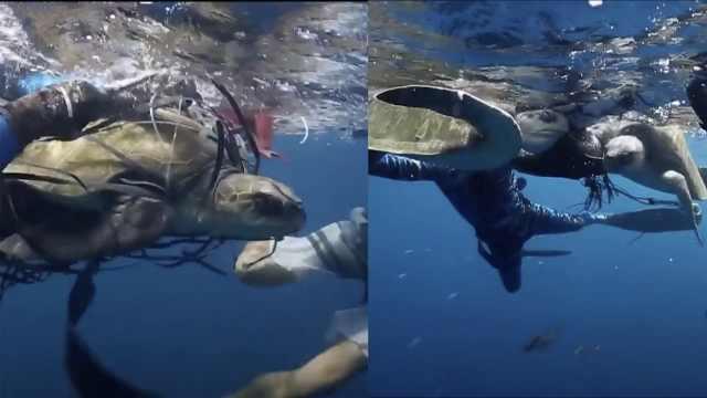 海洋垃圾缠绕海龟,潜水员全力救助