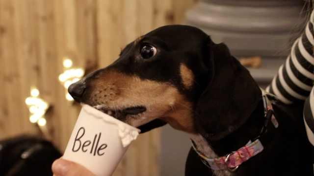"""英国咖啡店为狗推出""""狗布基诺"""""""
