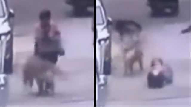 女子遛大型犬未牵绳,老人被撞骨折