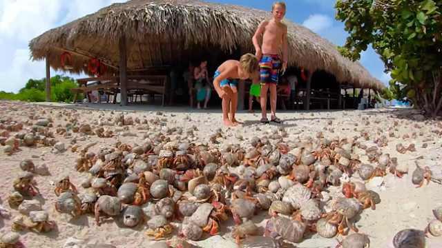密密麻麻!大批寄居蟹在沙滩乱窜