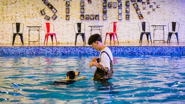 他为一条狗造8600㎡豪宅,带泳池
